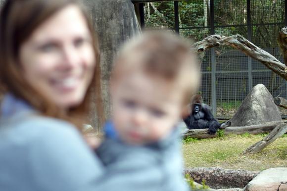 Audubon Zoo, New Orleans | R.Simple Life