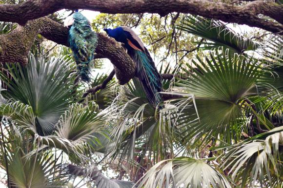 Audubon Zoo New Orleans | R.Simple Life
