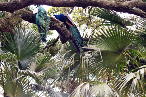Audubon Zoo New Orleans | R.Simple Life